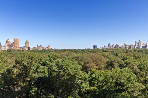 Central-Park-canopy view