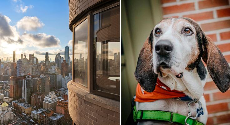 L: View from The Corinthian; R: Shelter animals in search of a new home too (via ASPCA)